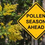 Polllen Season Ahead Warning